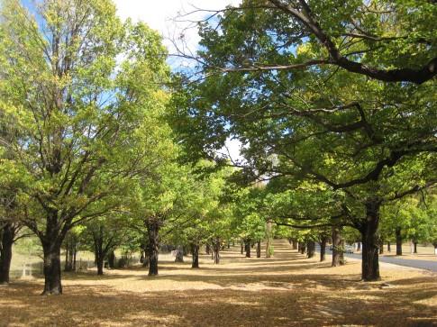 University trees