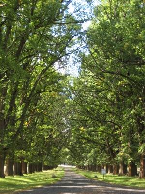 Gostwyck trees